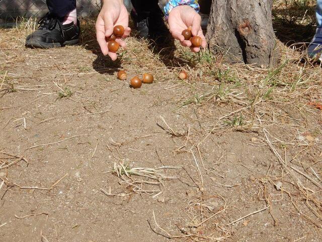「収穫の秋」(分園)